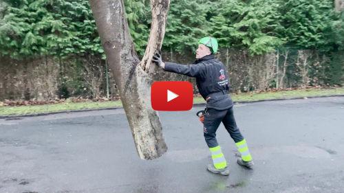træfældning med kran - video